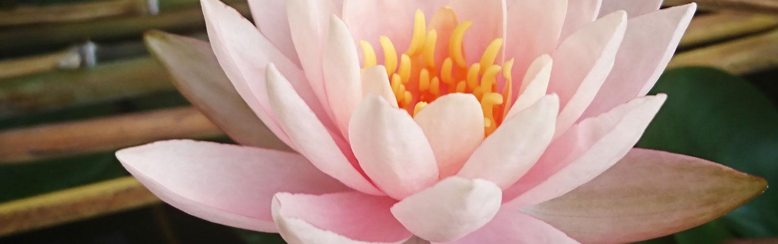 福岡 重留 佛願寺「みなさまの声/個別相談のご案内」イメージ画像
