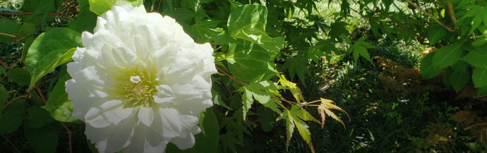熊本 花園 佛願寺「供養のご案内」イメージ画像