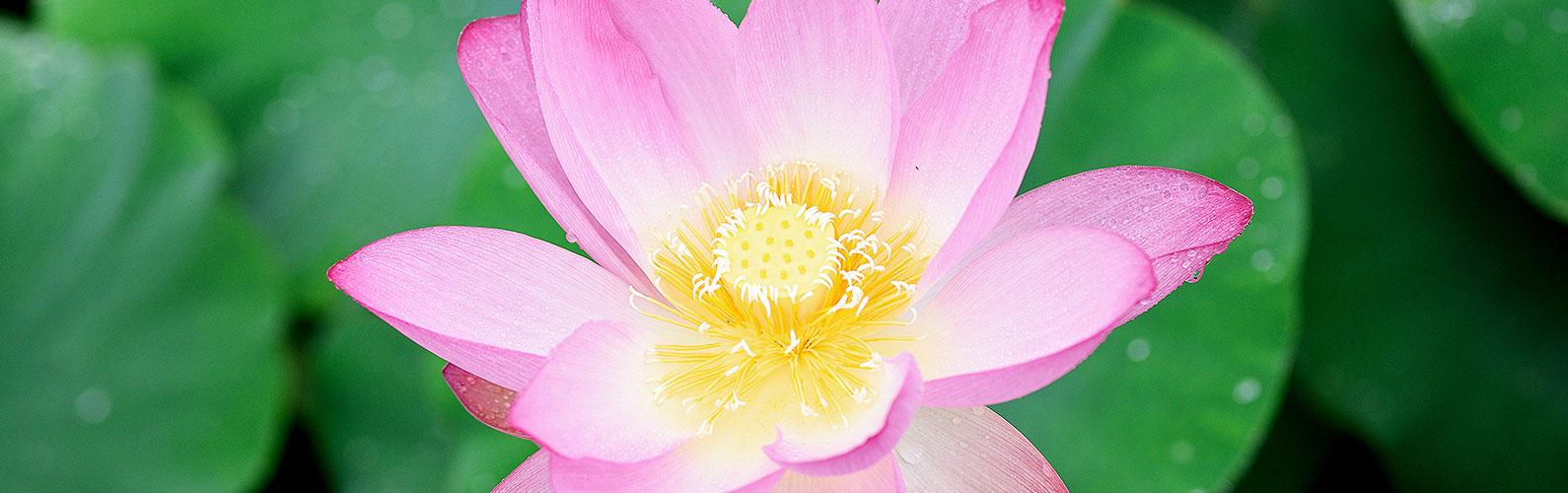 宗教法人 名古屋 豊国通 佛願寺「供養のご案内」イメージ画像